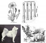 Four images showing: a poppy, a samoyed dog, recorders, and the Devil